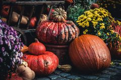 Traditional Halloween decoration, many different pumpkins and flowers on the street.  royalty free stock photography