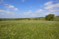 Traditional hay meadow Stock Photo