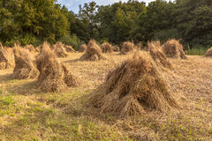 Traditional Haystack of buckwheat Royalty Free Stock Image