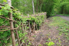 Traditional hedge fencing Stock Image