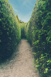 Traditional hedge maze. Pathway in a traditional hedge maze Royalty Free Stock Images