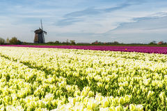 Traditional Holland countryside Royalty Free Stock Photo