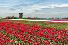 Traditional Holland countryside Stock Photography