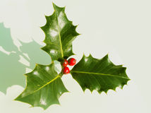 Traditional Holly royalty free stock images
