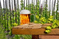 Traditional hop garden with beer glass. And malt Royalty Free Stock Photography