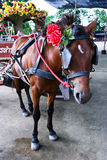 Traditional Horse Carriage Royalty Free Stock Photos