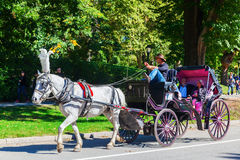 Traditional horse carriage in Central Park, Manhattan, NYC Stock Image