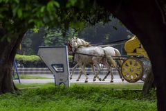 Traditional horse cart also known as Tanga or Rickshaw or chariot Kolkata, West Bengal, India. Portrait of a traditional decorated dress horse cart also known as royalty free stock images