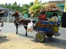 Traditional Horse and Cart Royalty Free Stock Images