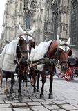 Traditional horse coach. Fiaker in Vienna Austria Stock Photography