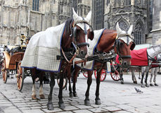 Traditional horse coach. Fiaker in Vienna Austria Stock Image