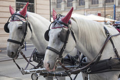Traditional horse coach Fiaker. In Vienna Austria Stock Images