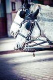 Traditional horse-drawn Fiaker carriage at famous Hofburg Palace in Vienna, Austria Stock Photography