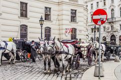 Vienna Traditional Horses stock image