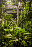 Traditional house in the amazonas jungle Stock Images