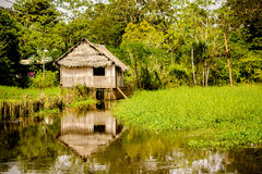 Traditional house in the amazonas jungle Royalty Free Stock Image