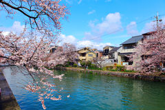 Traditional house in Japan with sakura Stock Photo