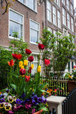 Traditional house with tulip garden Stock Photography
