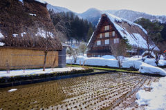 Traditional houses in the Japanese Alps. Rice fields and Ghasso houses in Shirakawa-go, Japan Stock Image
