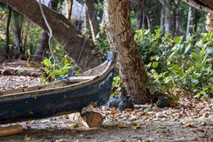 Indonesian canoes. Traditional Indonesian canoe on the coast of the city of Mumere, Indonesia stock photography