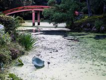 Traditional Japanese garden with pond and red bridge. Sunlit Japanese garden with green pond and red arching bridge at Usa shrine in Oita prefecture Stock Photos