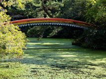 Traditional Japanese garden with pond and red bridge. Sunlit Japanese garden with green pond and red arching bridge at Usa shrine in Oita prefecture Stock Photo