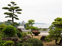 Traditional Japanese garden with shaped pine trees. Traditional Japanese garden with castle at historic town of Kitsuki, Oita prefecture stock photos
