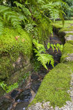 Traditional japanese garden water channel with Asplenium ruprechtii Royalty Free Stock Image
