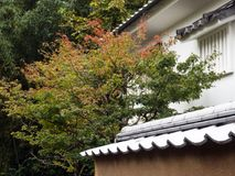 Traditional Japanese house with maple tree starting to change color. In Kitsuki city, Oita prefecture stock images