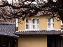 Traditional Japanese merchant house with cherry blossoms Royalty Free Stock Image