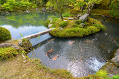 Traditional Japanese pond garden with colorful orange carp fish Royalty Free Stock Photography
