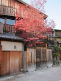 Traditional Japanese Shop house with maple tree Royalty Free Stock Photography