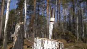 Traditional japanese short sword in stump. Traditional japanese short sword tanto with wooden handle in birch stump in forest, close up stock video