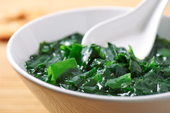 Traditional Japanese soup made of seaweed wakame Stock Image