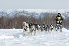 Traditional Kamchatka Sled Dog Race Beringia Stock Photo