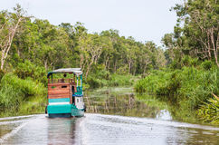 Traditional Klotok sailing on a river in Tanjung Puting National Park, Kalimantan, Indonesia. Royalty Free Stock Image