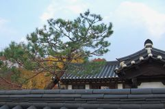 Traditional korean Buildings and roofs with a pine tree Pinus d royalty free stock photos