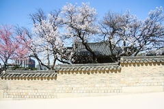 Traditional korean wall. In temple, korea stock images