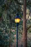 Traditional Lamp Post by Tree and Spanish Moss Royalty Free Stock Photos