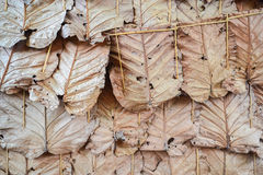 Traditional leaf wall. Simple traditional leaf wall decoration Stock Image