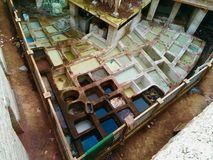 Traditional leather tanning and dying in Fez, Morocco. stock photos