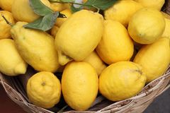 Traditional lemons in Amalfi Coast. Italy stock images
