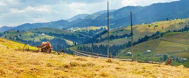 Traditional life of Carpathian mountains Stock Images