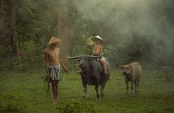 Traditional life of famer in countryside Thailand. royalty free stock image