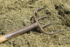 Traditional manure fork on a bale of cattle feed. Traditional manure fork with four teeth for spreading of cattle feed Stock Photo