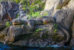 Maori rock carvings, Lizard, Taupo Lake, New Zealand Royalty Free Stock Photography
