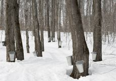 Traditional maple syrup production Stock Photos