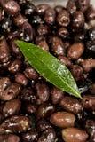 Traditional marinated olives Royalty Free Stock Photos