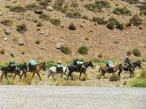 Caravan of mules carrying merchandise between Chile and Argentina royalty free stock images