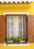 Traditional mediterranean window on yellow wall. With plants in front Royalty Free Stock Image